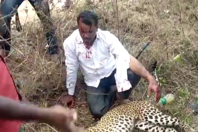 Un hombre mató a un leopardo solo con sus manos para defender a su familia