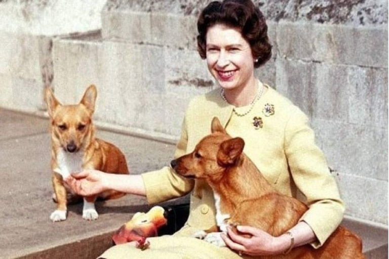 Con el fallecimiento de Vulcan, solo queda Candy como mascota que hará compañía a la reina por estos días
