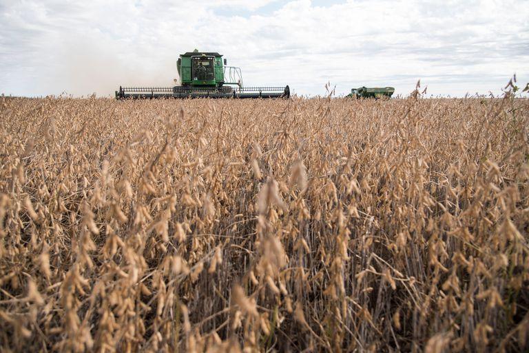 Por el inicio de la cosecha en EE.UU. y el derrumbe de Wall Street, la soja tuvo bajas del 1,7% en Chicago