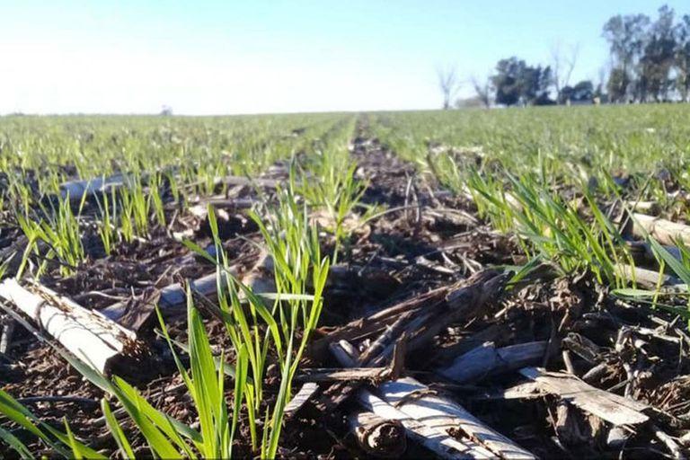 La innovación resultará clave para el negocio agrícola