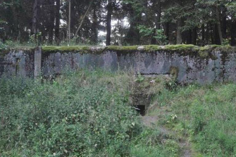 Las hormigas habían quedado atrapadas en un antiguo refugio de municiones donde alguna vez se guardaron armas de la extinta Unión de Repúblicas Socialistas Soviéticas (URSS)