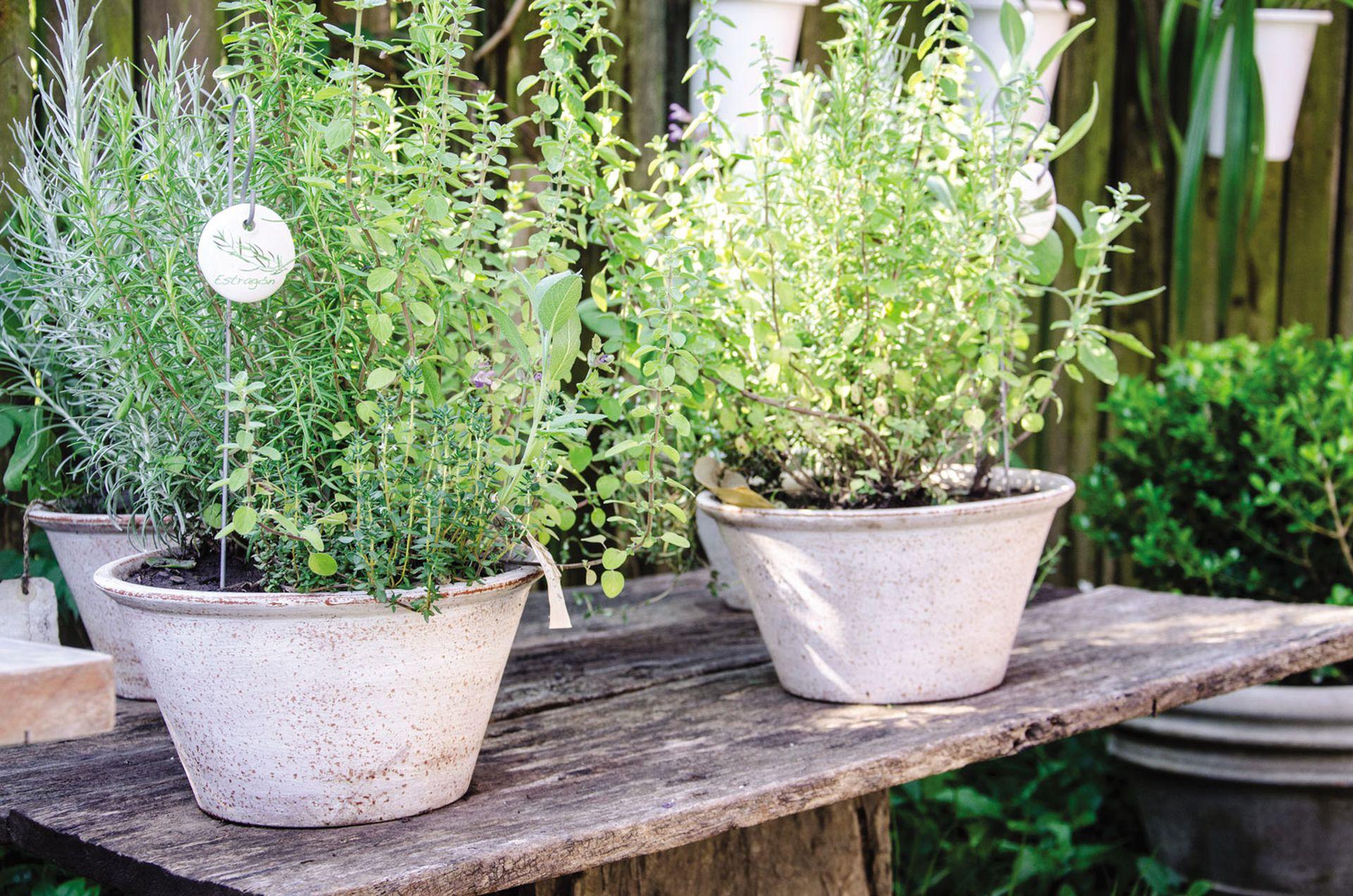 Aprender a conservar plantas aromáticas permite tener siempre a mano hierbas en la cocina.
