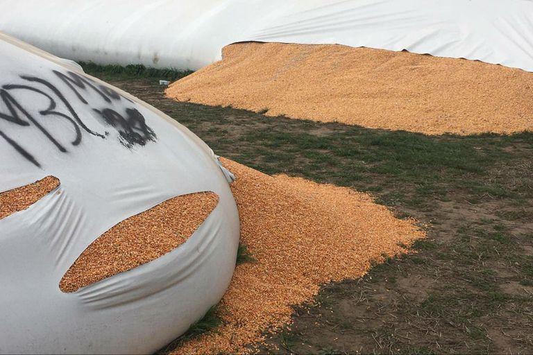 Silobolsas. Imputan a dos personas por el ataque a la cerealera Cargill