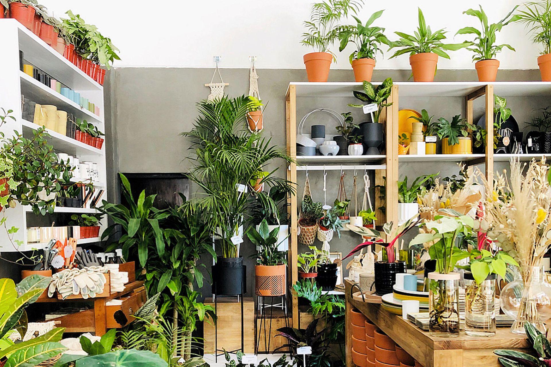 Atelier botánico, un vivero con productos cuidadosamente curados.