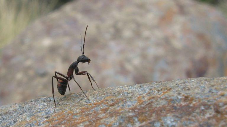 ¿Chau Servicio Meteorológico? El biólogo argentino que predice el clima estudiando hormigas