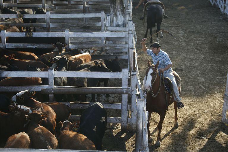 Balance. Las operaciones de diciembre culminaron con 127.762 animales vendidos, con un precio promedio general de $133,548 y con un peso medio general de 412,97 kg