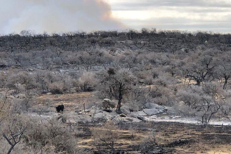 Incendios: Los animales se quedan sin alimentos en un paisaje de ceniza y piedra