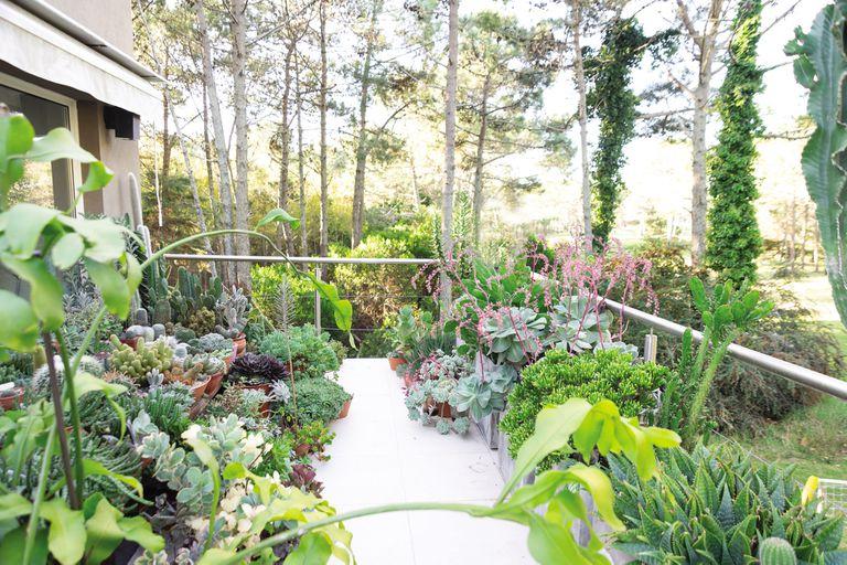 Una espectacular colección de cactus y suculentas, protagonista de una terraza en la costa atlántica