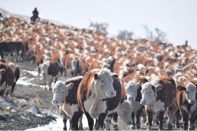 Tierra del Fuego se prepara para abrir un laboratorio de genética ganadera