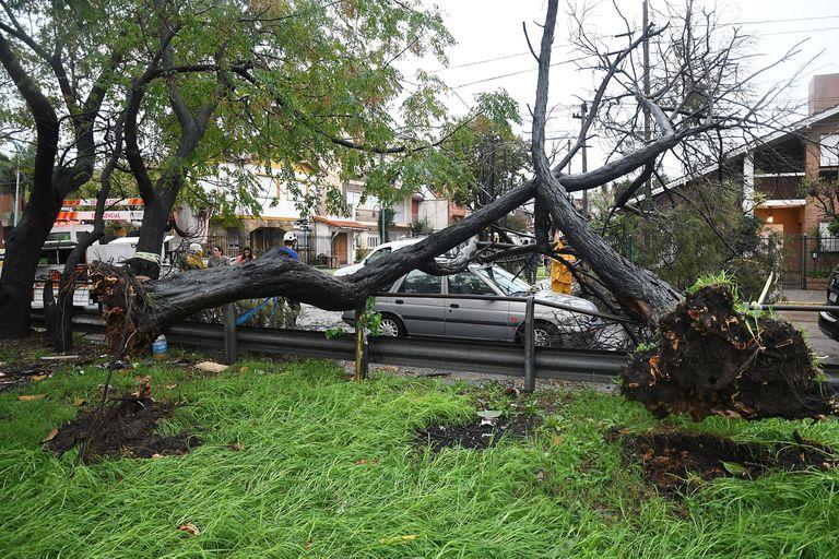 La tormenta presentó fuertes ráfagas de viento que provocaron caídas de árboles y voladuras de techos