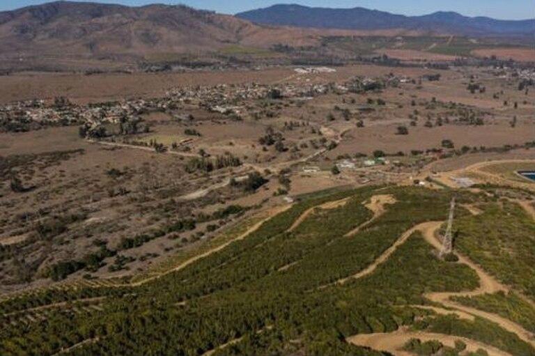 Vista aérea de una plantación de paltos en La Ligua, región de Valparaíso