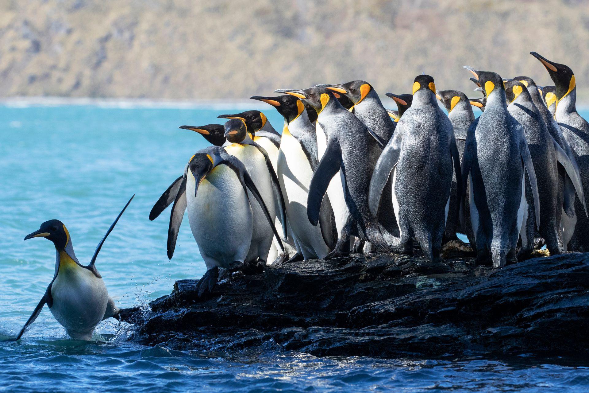 Según el Informe Planeta Vivo, por el cambio climático, una de cada cinco especies se encuentra en peligro de extinción