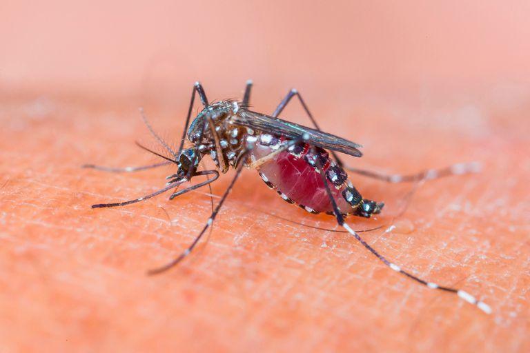 Cuáles son principales medidas de prevención contra el dengue y los consejos para evitar la proliferación de mosquitos en el hogar