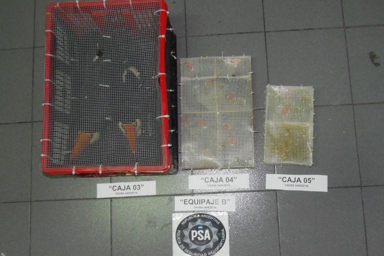 Epígrafe: las aves que dos españoles quisieron sacar del país de contrabando