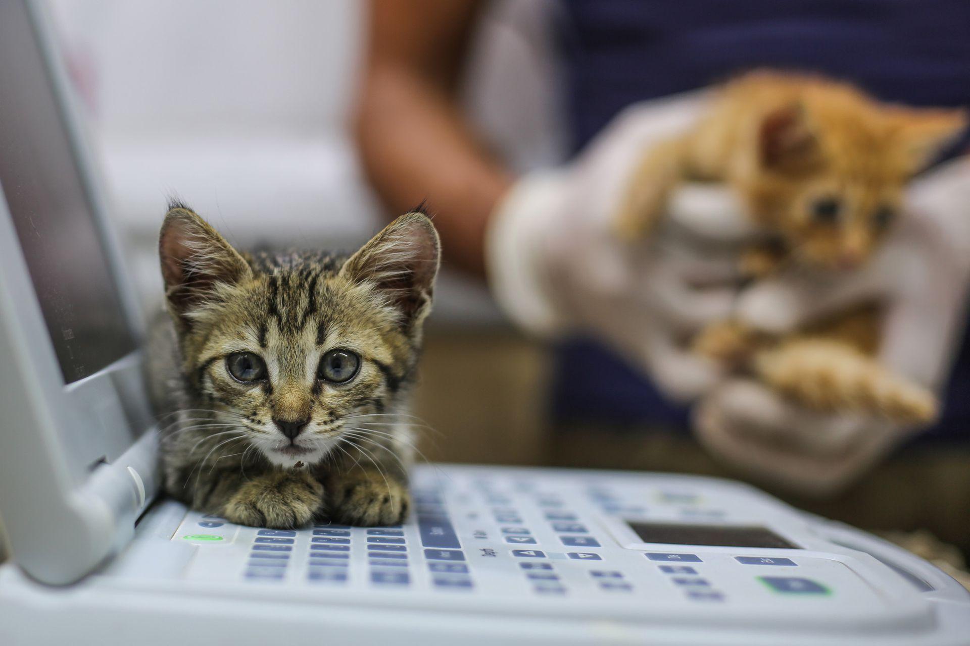 Con el tiempo su trabajo compasivo con los gatos se volvió viral