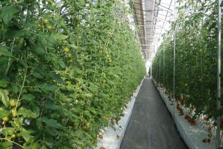 El método de producción con películas de polímeros permite la agricultura en cualquier parte del planeta