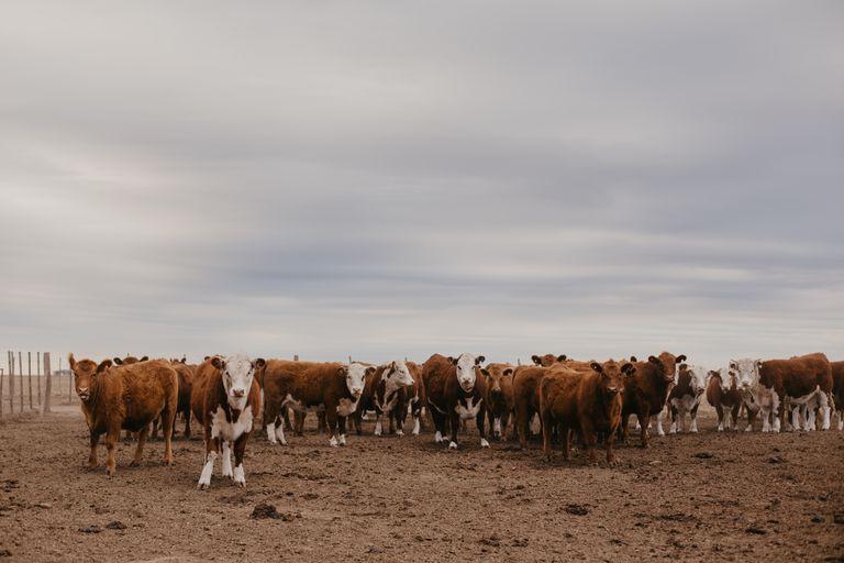 Diversificar la oferta forrajera para producir más kilos de carne