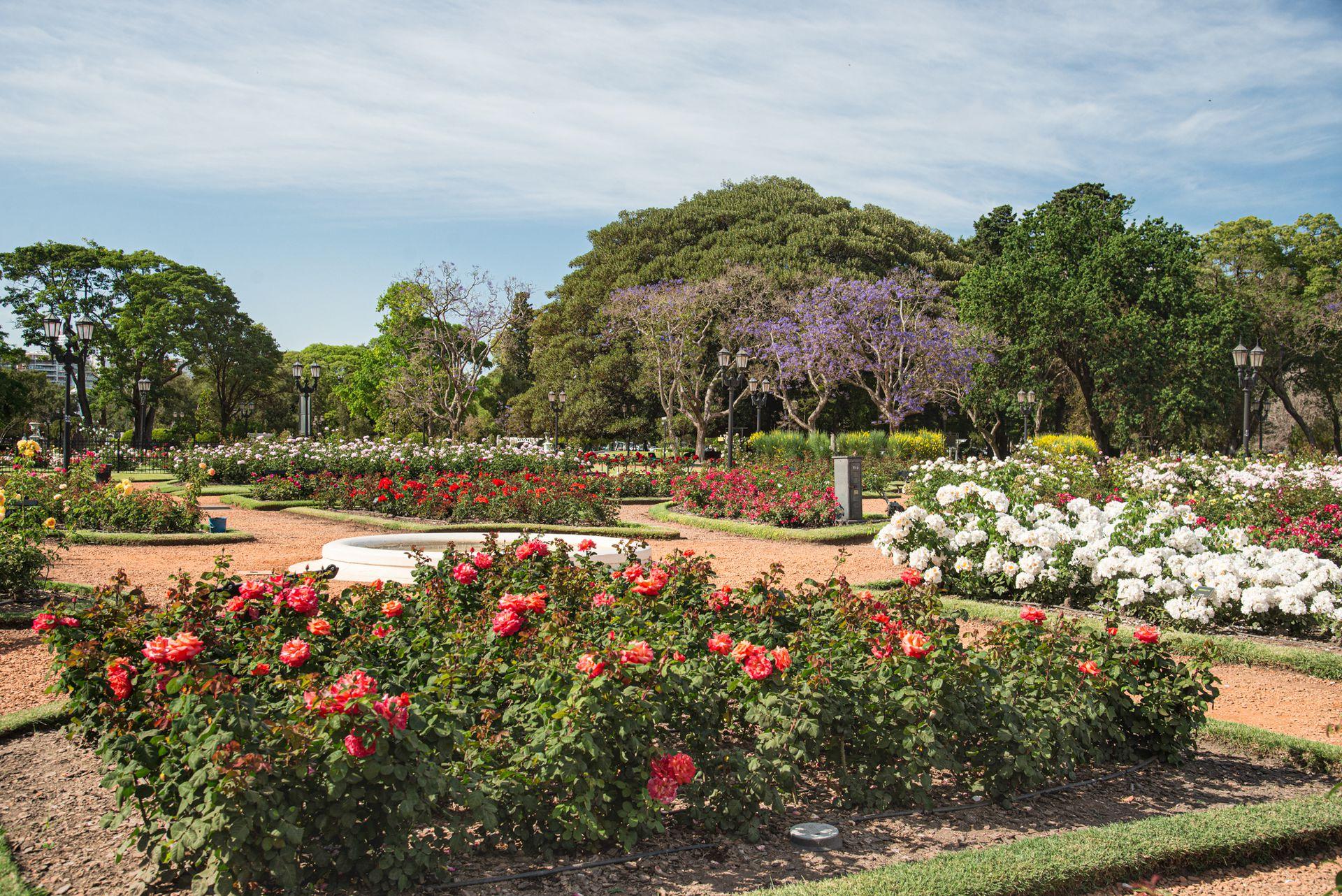 El Rosedal de Palermo alberga gran variedad de Rosas Modernas, aproximadamente 8.000 ejemplares, entre rosas Trepadoras, Arbustivas, Híbridos de Té, Floribundas y algunas Rosas Antiguas. Una combinación  de perfumes y colores atrae a fanáticos de estas flores.