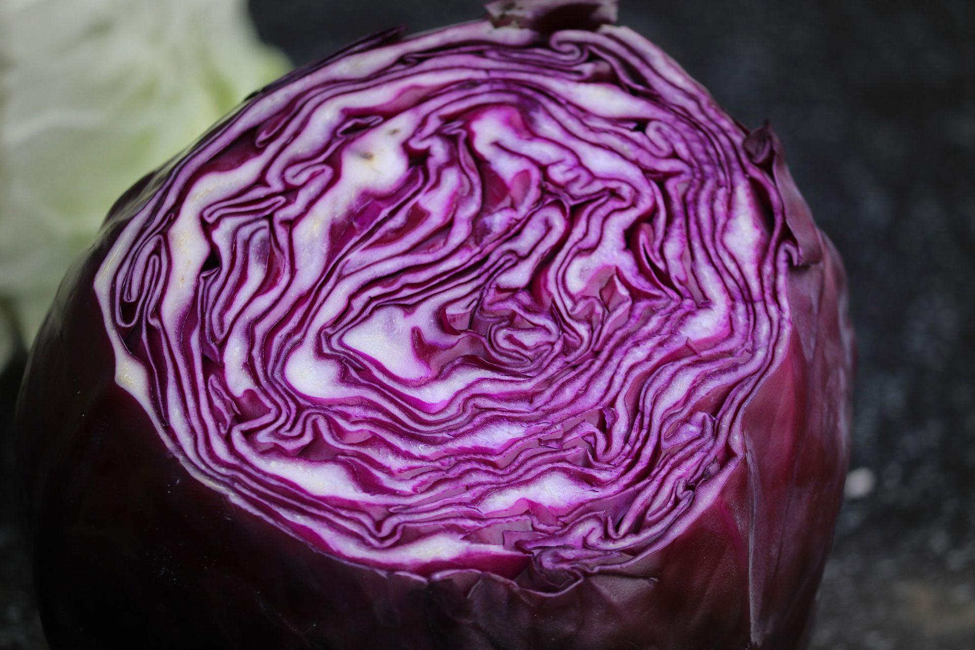 El lila pide un poco más de cocción que el resto de las especies de repollo. Se puede preparar con chuletas de cerdo doradas, manzanas en gajos caramelizadas con un poquito de azúcar, cocidos todos junto con el repollo en vino tinto.