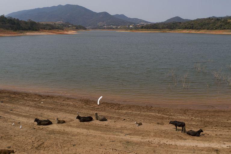Por su peor sequía en décadas, en Brasil temen apagones y Bolsonaro ya toma medidas