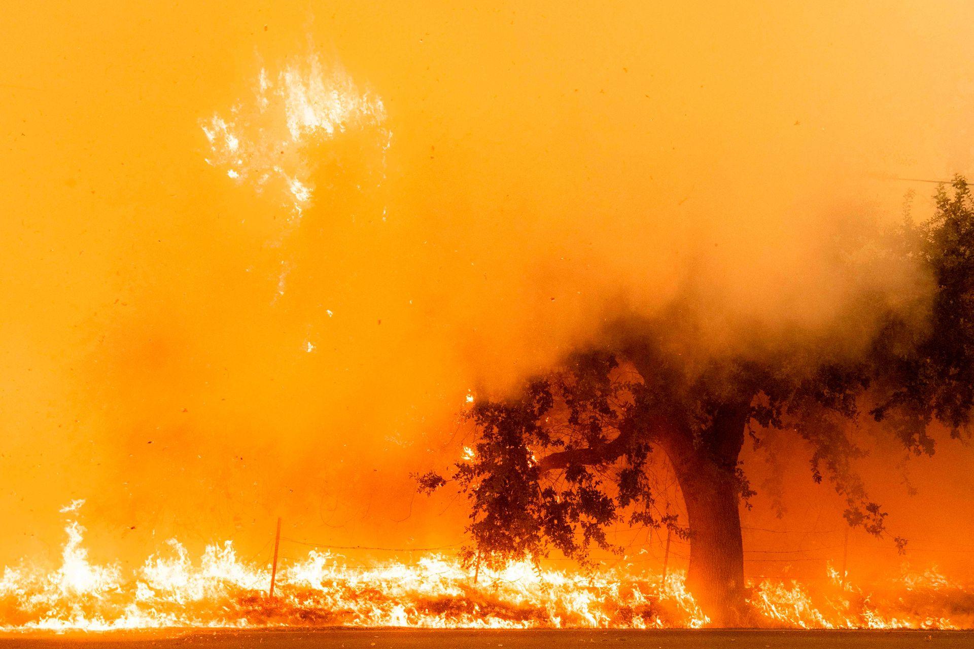 Se agrava la situación por los Miles de hectáreas han sido devoradas por el fuego en California