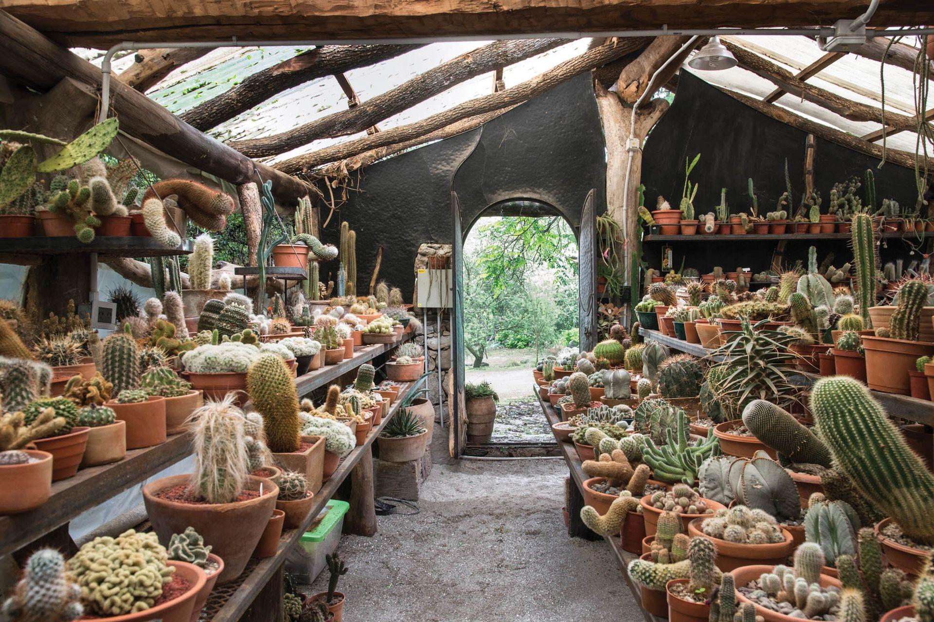 El cactario cuenta con una colección única de cactus y es un fuerte atractivo del lugar.