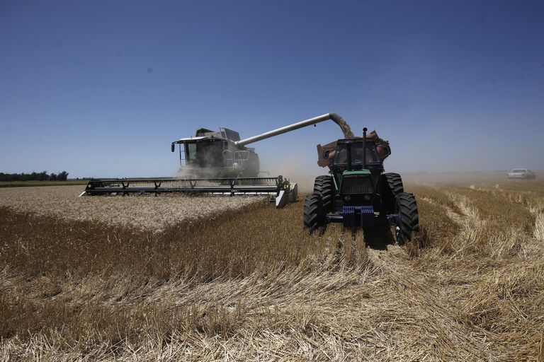 El trigo argentino enfrenta un partido cómodo y nuestro cereal llega a destinos no habituales