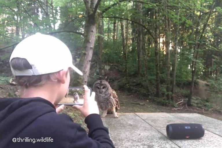 Un niño de 13 años captura su increíble encuentro con un búho en un bosque