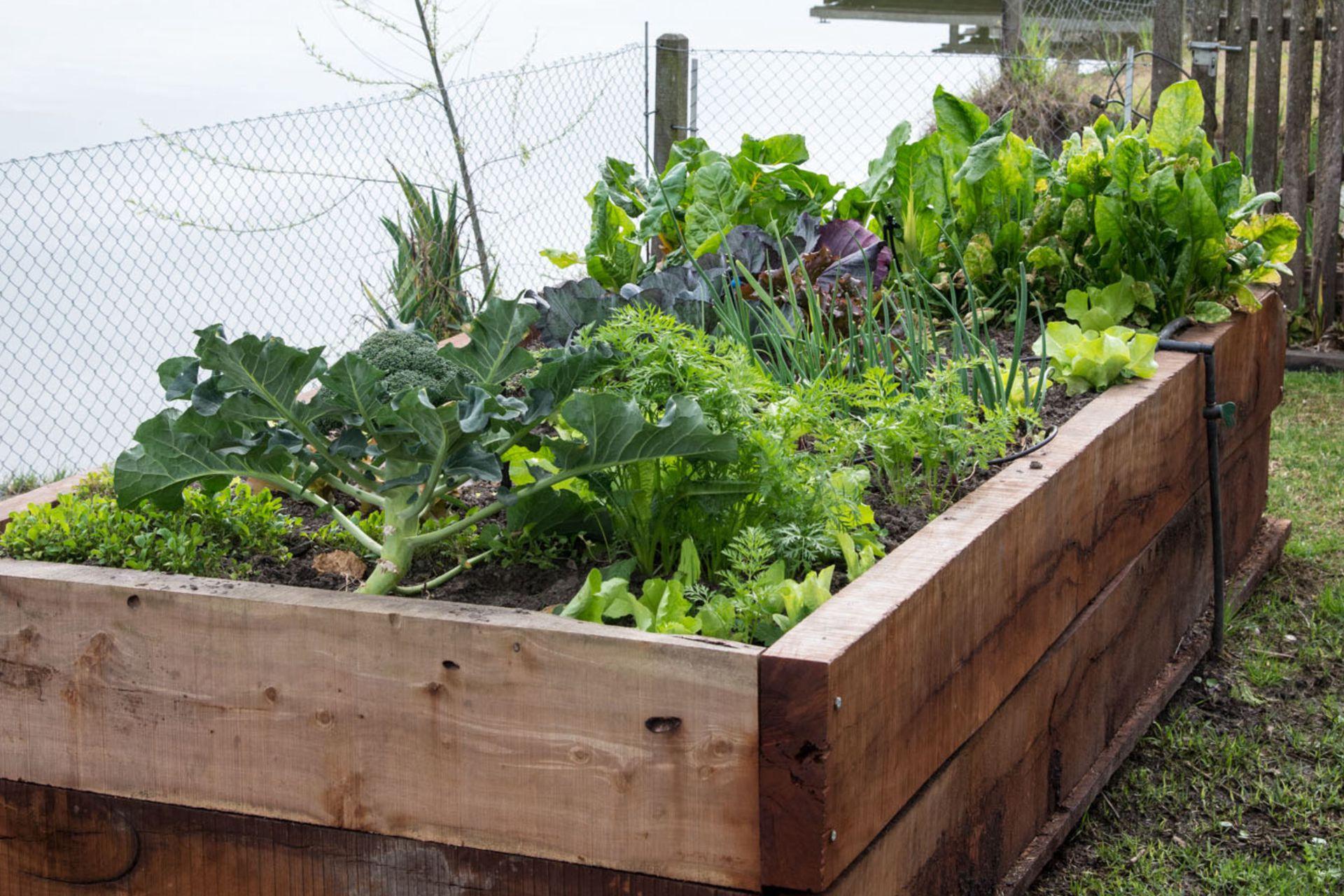 Riego, suelo, sustrato, sol y sanidad determinarán los resultados de lo que cultivamos.