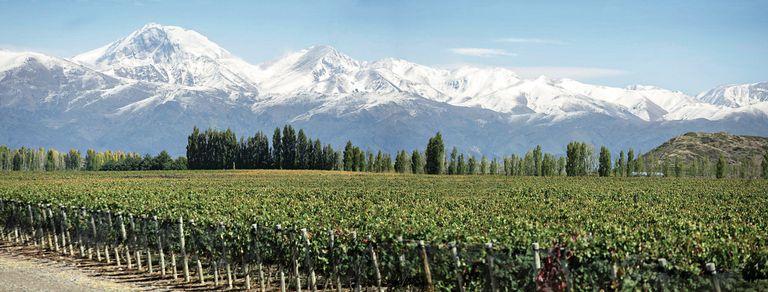 """""""La Argentina es el paraíso del vino. En la zona cordillerana tiene todo: mucho sol, altura y suelos pobres"""", dice Laura Catena"""