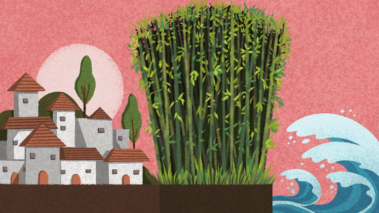 Sembrar bambú puede evitar la erosión y reducir el riesgo de inundación