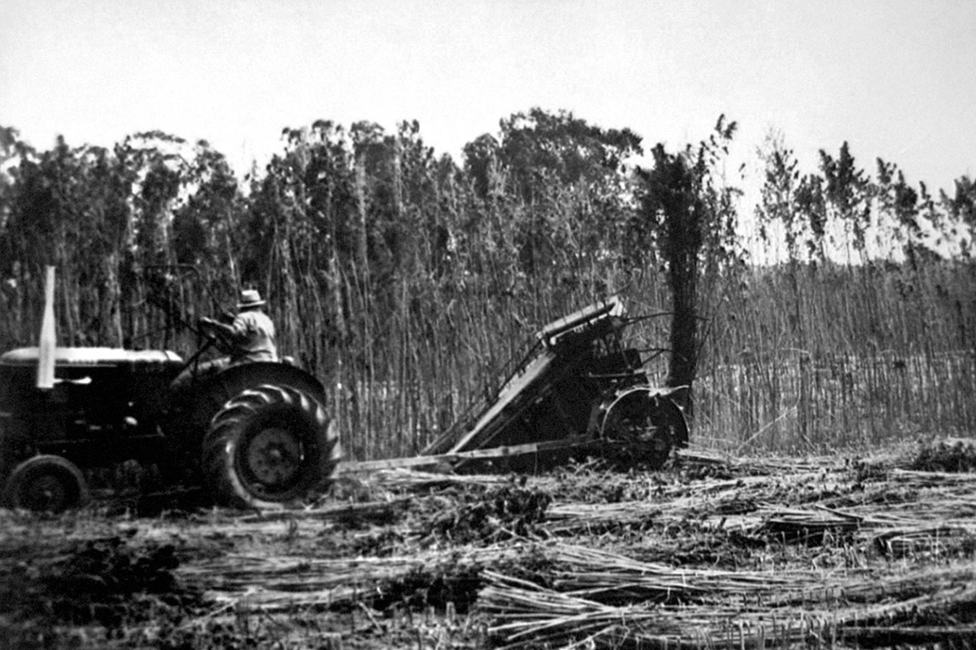 Linera Bonaerense proveía de materia prima a la Algodonera Flandria.