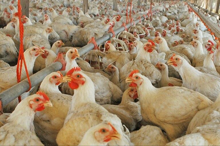 Para el presidente de Capia, Javier Prida, el problema radica en el margen de quebranto que dejan los huevos enmarcados en el programa de los Precios Cuidados