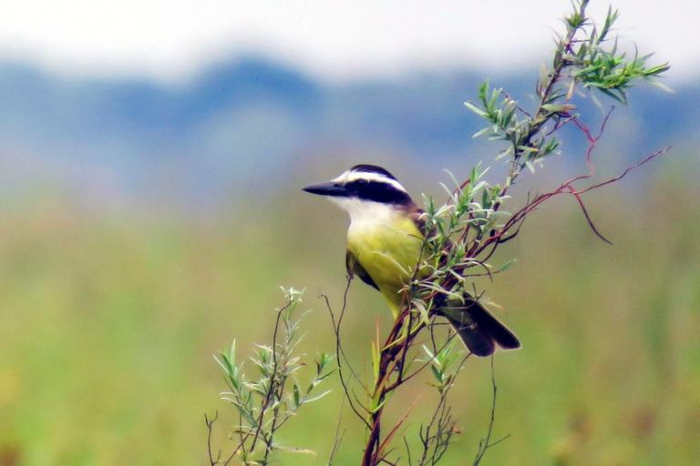 e Bird Argentina convoca al Conteo de Aves de Jardín a realizarse entre el 12 y el 15 de febrero