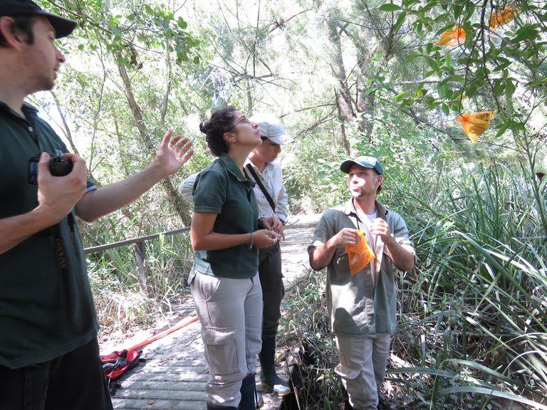 Trabajan en la reforestación de especies nativas en el Delta del Paraná