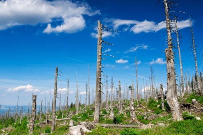Tres desastres medioambientales que casi hemos solucionado (y qué lecciones podemos aprender de ellos)
