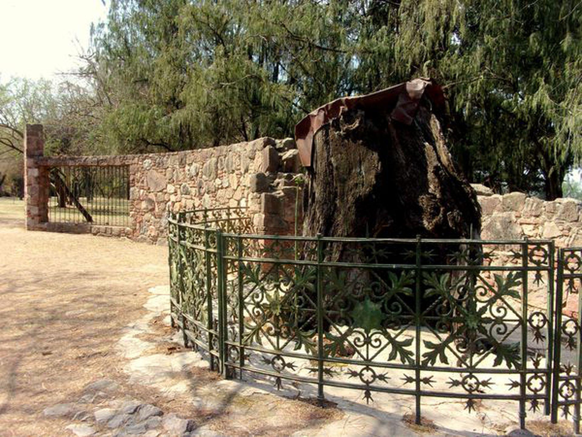 Los restos del histórico nogal en el parque de la Estancia jesuítica de Jesús María.