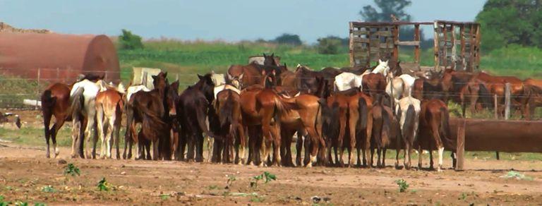 El conmovedor documental que revela el triste destino de muchos caballos