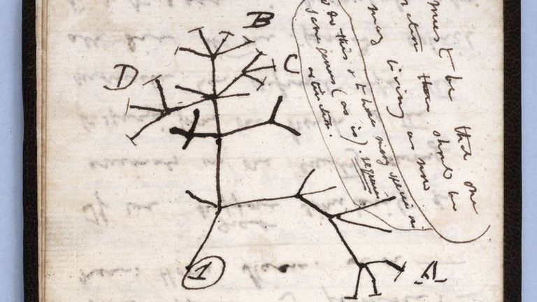 El boceto del árbol de la vida es una de las notas que se perdieron.