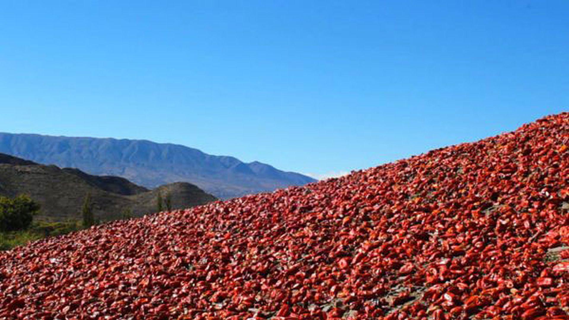 Pimientos a granel: una escena de la serie documental La ruta de las especias.