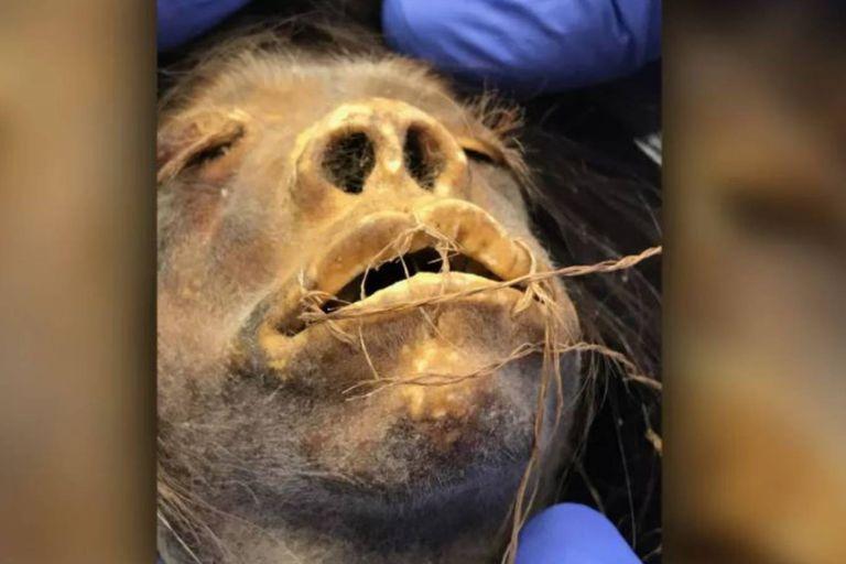 La tsantsa o cabeza reducida fue adquirida en Ecuador por el profesor estadounidense James Ostelle Harrison