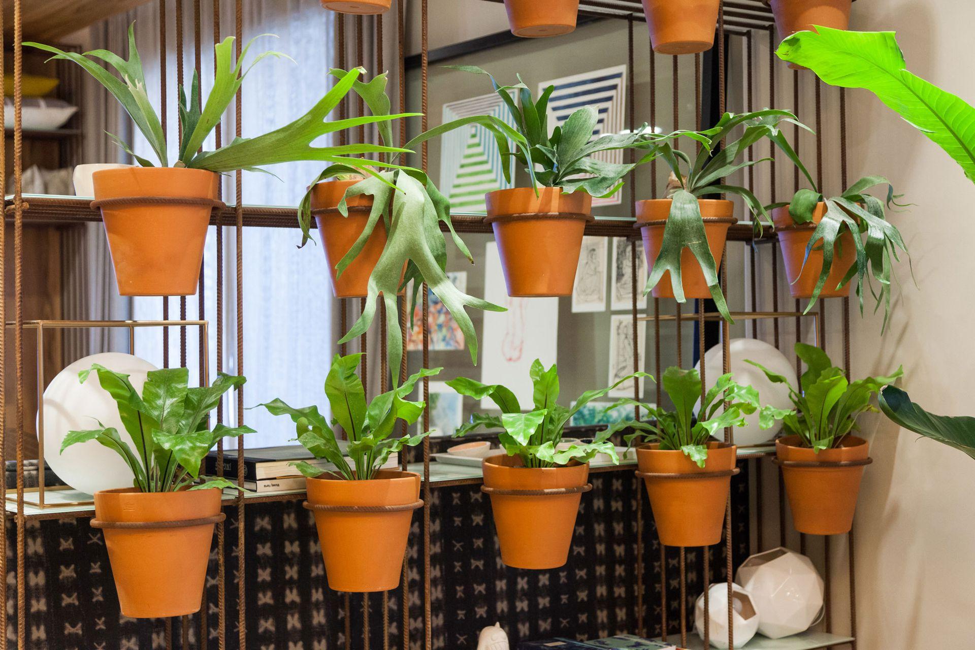 Una de las recomendaciones para las plantas de interior, es no exponerlas a corrientes frías de aire.