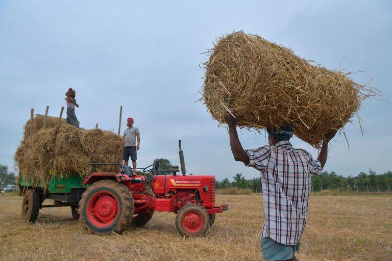 AgTech: ¿por qué hay que mirar lo que sucede en el agro de la India?