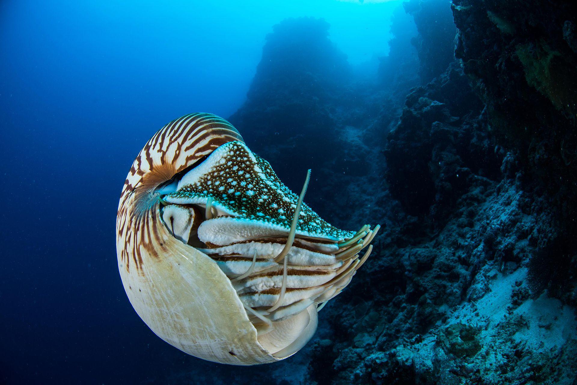 Para tomar las fotografías submarinas se utilizan dropcam