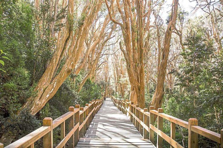 En el parque, hay árboles que tienen más de 600 años