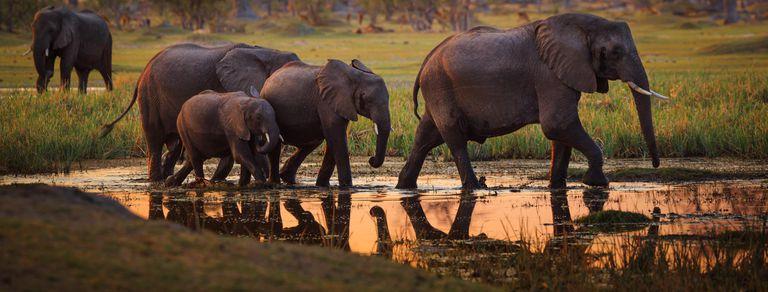 Diamantes y elefantes. La fórmula económica de Botswana para salir de la pobreza