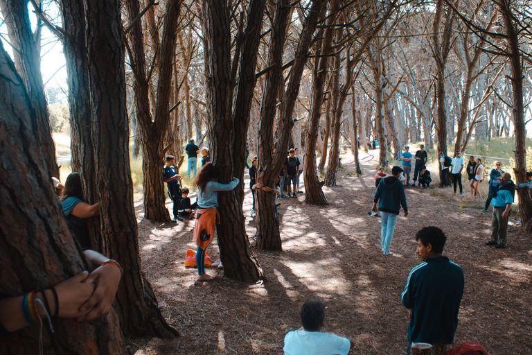 Un misterioso bosque encantado en Miramar