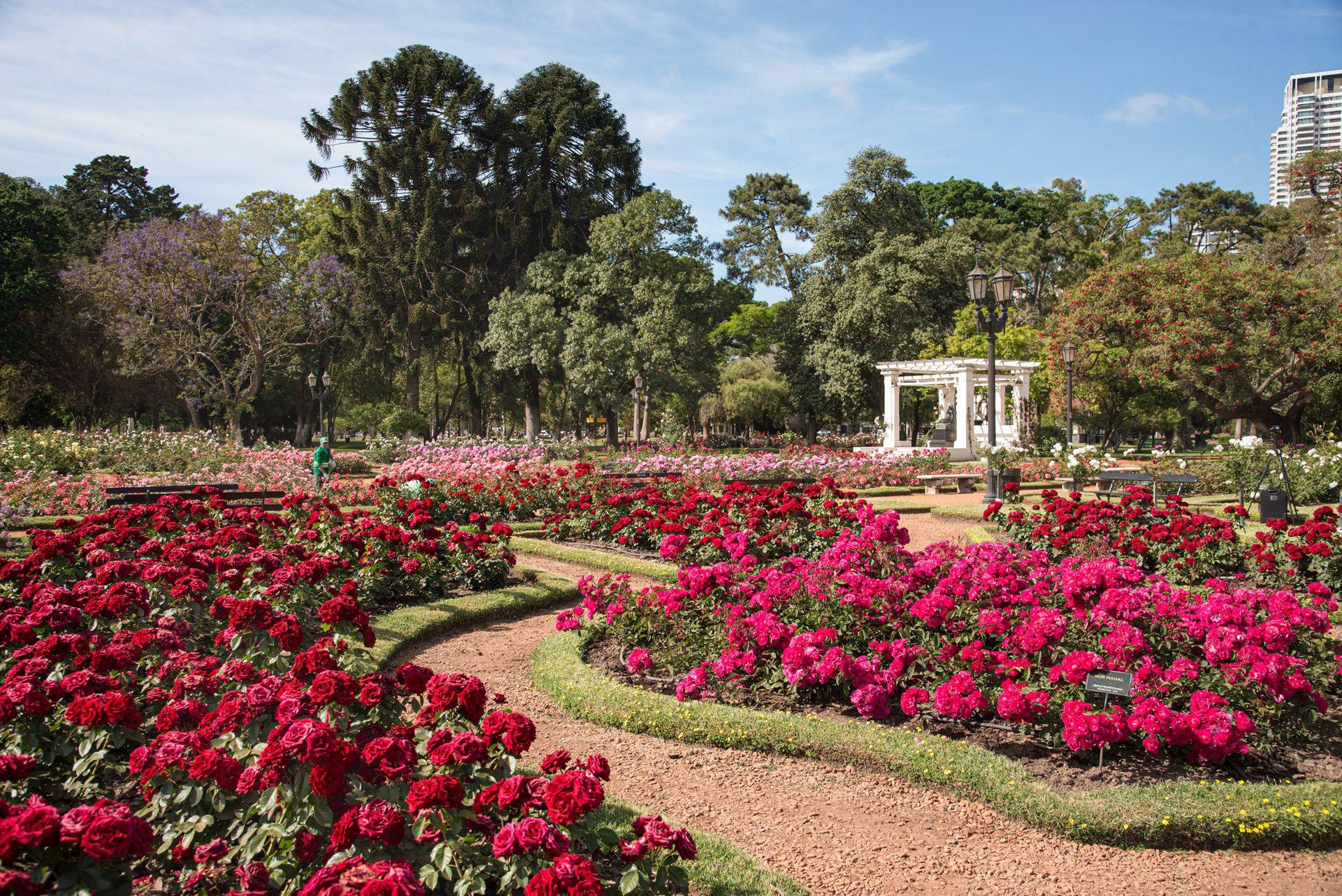 El Rosedal es un emblema del diseño paisajístico porteño y uno de los espacios más visitados del parque 3 de febrero por turistas y vecinos.