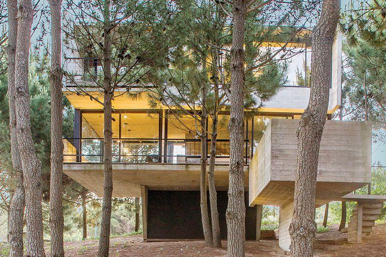 De hormigón, la casa que se eleva en un bosque que se mantuvo intacto