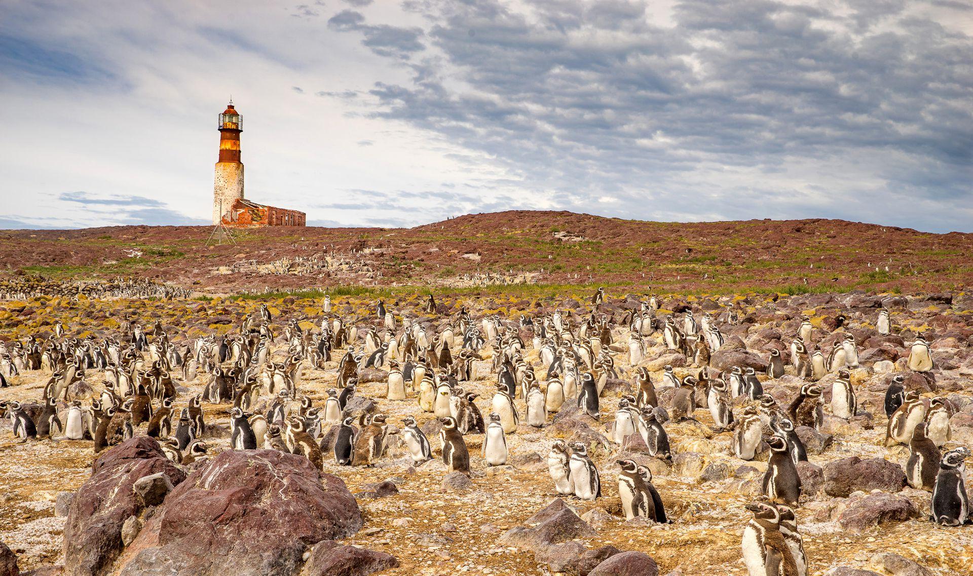 Pingüinos magallánicos en la Isla Pingüino. El sito es Parque Nacional.